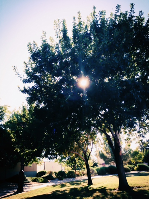 #Sunlight and #Trees in #DTPHX #AZ #MyCity  I  #BSMHB  #BeStillMyHeartBlog I  www.BeStillMyHeartBlog.wordpress.com